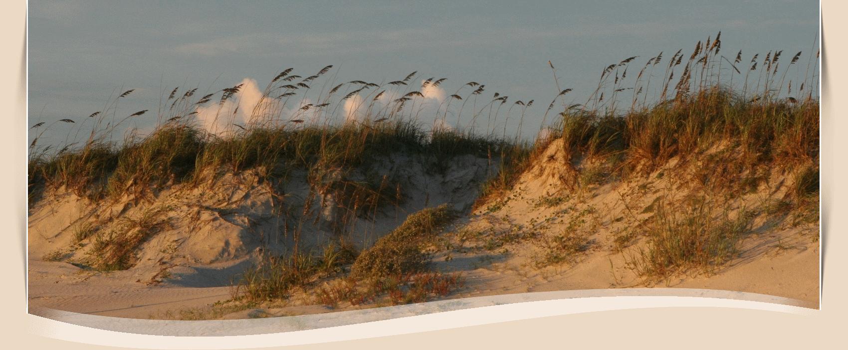 Beach Information | New Smyrna Beach, FL - Official Website